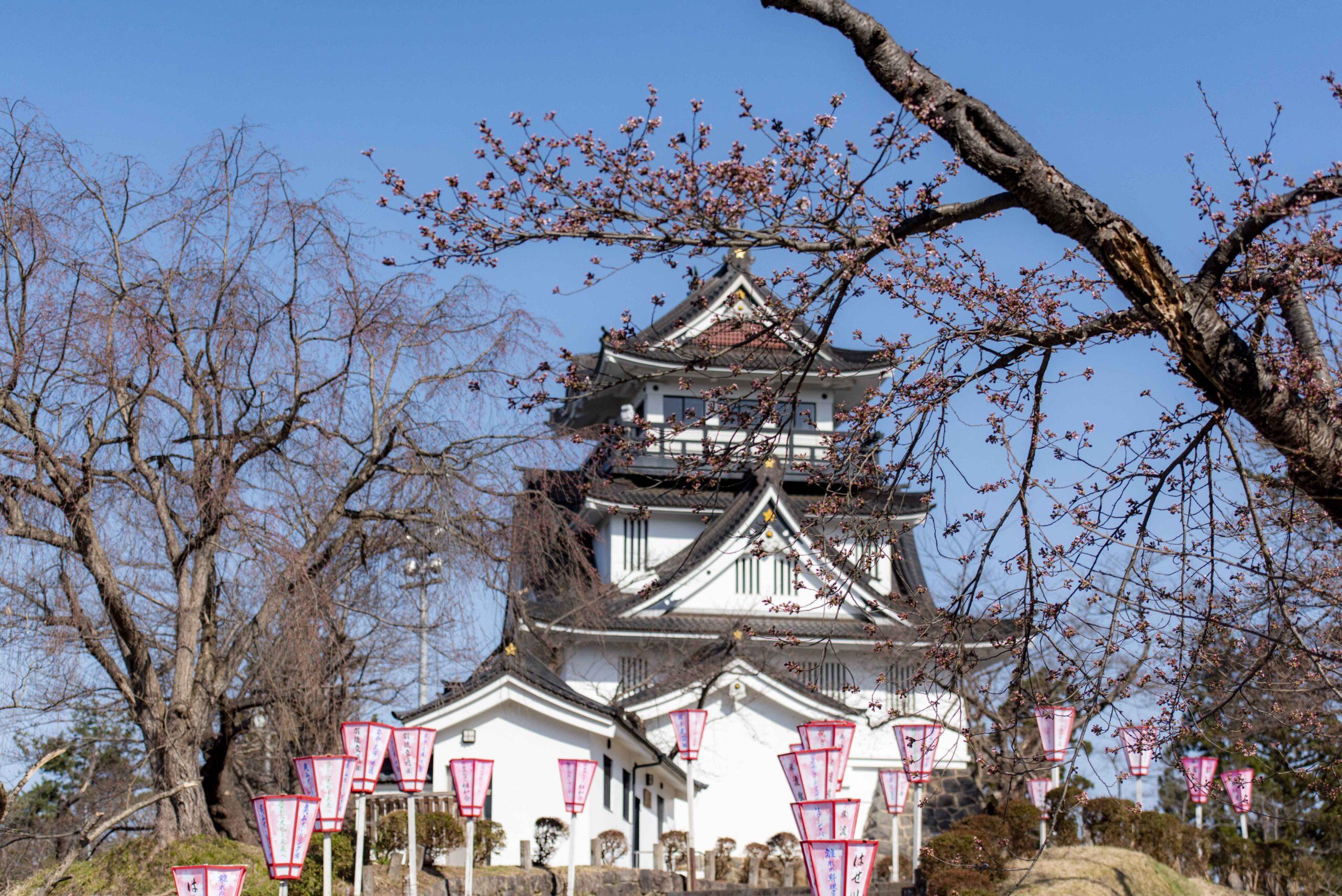 横手公園の桜開花