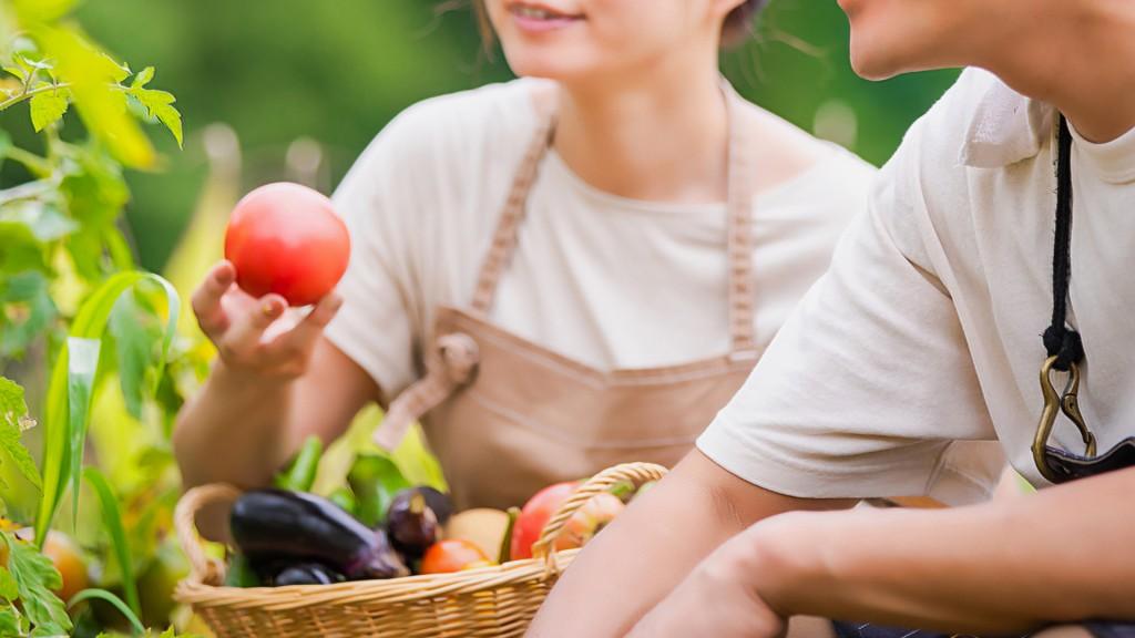夏野菜の栽培講習会(圃場編)