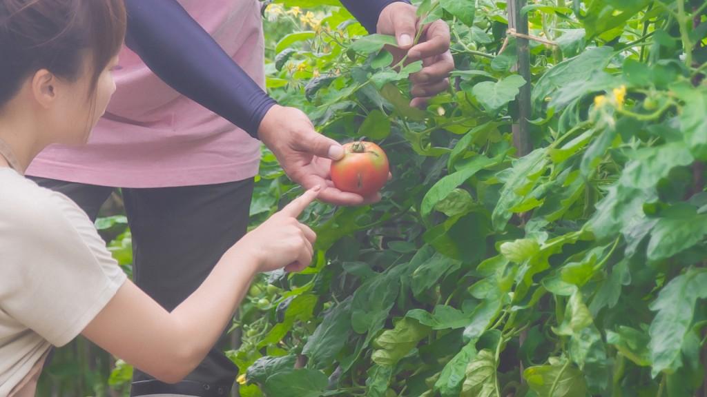 就農を検討している方対象 園芸農業を体験できる研修を実施します