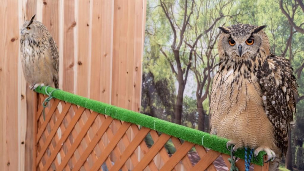 横手・十文字道の駅で「ふれあい動物園」 フクロウなど展示