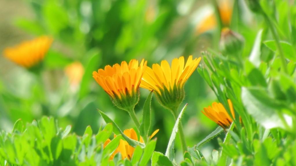 花と緑で豊かな環境づくりをしてみませんか