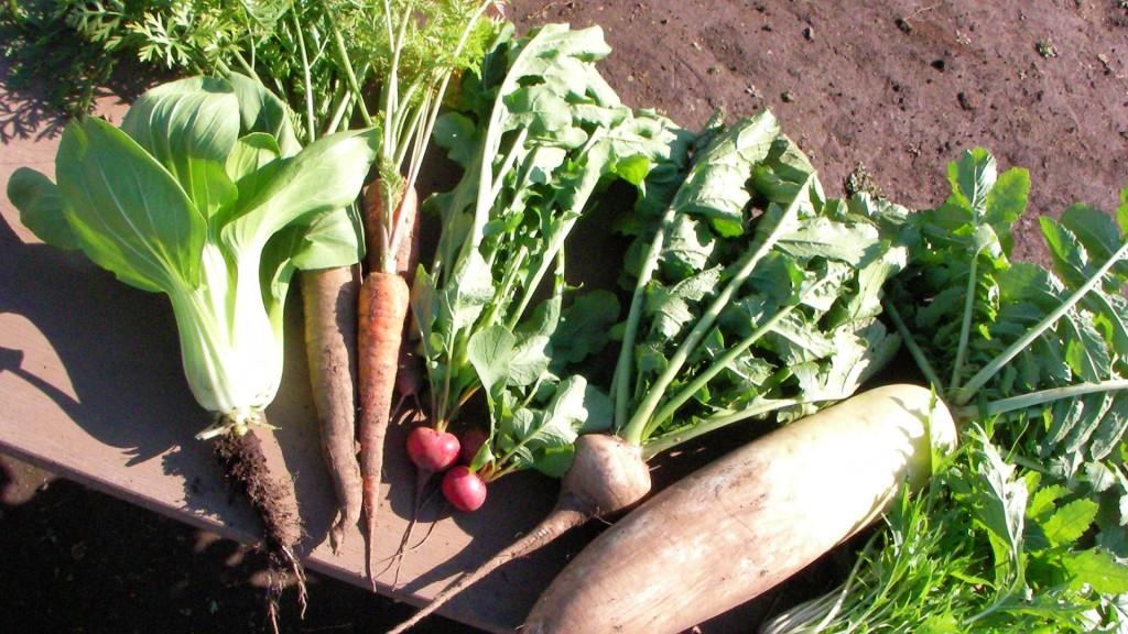 秋野菜の栽培講習会(座学) 当日は苗の注文もできます!