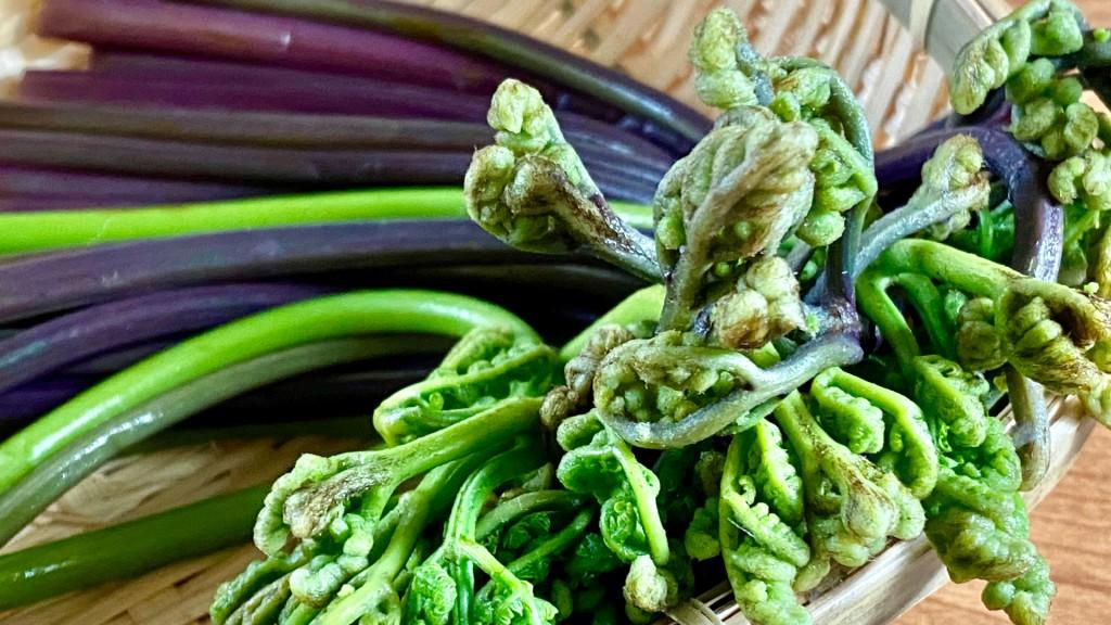 山菜を食べて、春を感じてみませんか!