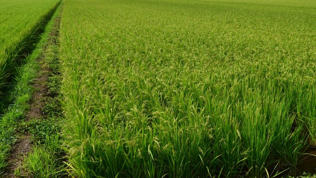 農作物(水稲)防除ドローンを導入する費用を助成します