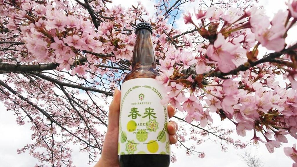 羽後麦酒で販売する「春来エール」パッケージ